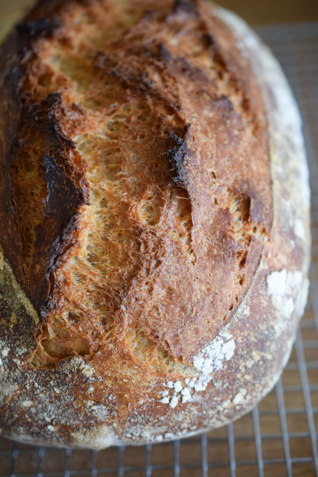 40% Whole Wheat No-Knead Bread – a bag of flour